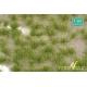 Touffes d'herbe haute début d'automne MINISOCLES