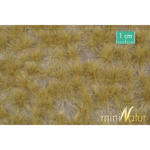 Touffes d'herbe haute fin d'automne