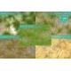Touffes d'herbe haute printemps