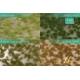 Touffes d'herbe BICOLORE courte printemps