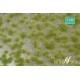 Touffes d'herbe BICOLORE moyenne printemps MINISOCLES