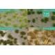 Touffes d'herbe BICOLORE moyenne printemps