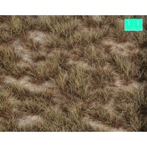 Touffes d'herbe BICOLORE moyenne Désert