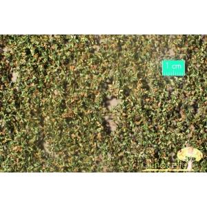 Feuilles de chêne début d'automne (15x4cm)