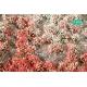 Touffes de fleurs courtes rouges et blanches