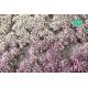 Touffes de fleurs courtes violettes et blanches