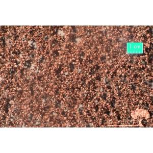 Feuilles de hêtre fin d'Automne (15x4cm)