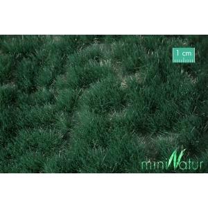 Touffes de Carex été