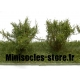 Arbustes 35-45 mm Vert Clair (x5)