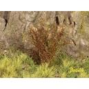 Arbustes 35-45 mm Vert Chêne Sec (x5)