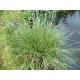 Carex dans la nature