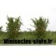 Arbustes 35-45 mm Vert Chêne (x5)