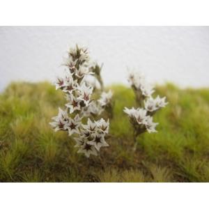 Fleurs naturelles blanches et rouges