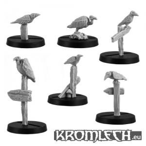 Oiseaux de proie (x6)