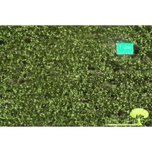 Feuilles de hêtre été (15x8cm)