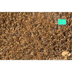Feuilles de chêne fin d'Automne (15x8cm)