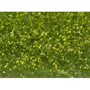 Fleurs des prés jaunes