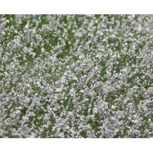 Fleurs des prés blanches et violet clair