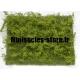Buissons sauvages jaunes - Genêts MINISOCLES