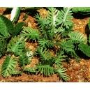 Photo Découpe Papier Plantes Jungle (N°1) 1:72