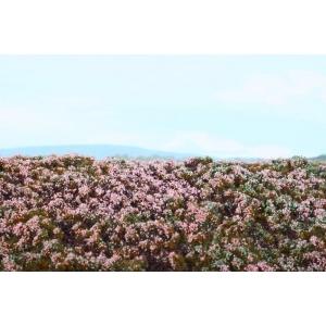 Lande sauvage / Bruyères multicolores