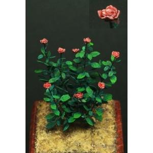 Photo Découpe Papier Rosiers et Roses