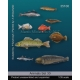 Set de poissons marins 2 (x9) Echelle 54mm