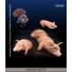 Set d'Animaux de la Ferme (x4) Echelle 54mm
