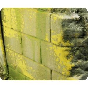 Moisissures et Lichens ACRYLIQUE
