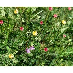 Photo Découpe Fleurs des prés 1:35