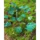 Photo Découpe Papier + Résine Plantes Jungle (N°1) 1:35