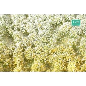 Touffes de fleurs courtes jaunes et blanches
