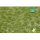 Touffes d'herbe moyenne printemps