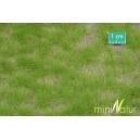 Touffes d'herbe haute printemps MINISOCLES