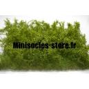 Buissons sauvages jaunes - Genêts