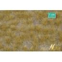Touffes d'herbe haute fin d'automne MINISOCLES