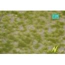 Touffes d'herbe BICOLORE courte printemps MINISOCLES
