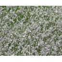 Fleurs des prés Blanc et Violet Clair MINISOCLES