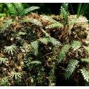 Photo Découpe Papier Plantes Jungle (N°2) 1:72