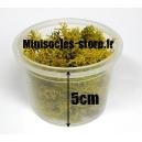 Lichen naturel séché