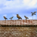 Set d'oiseaux N°2 (x10) Echelle 54mm
