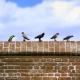 Set d'oiseaux N°1 (x10) Echelle 54mm