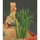 Photo Découpe Plantes de marais (N°2) 1:35 MINISOCLES