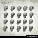Crânes humains 28-32mm (x20)